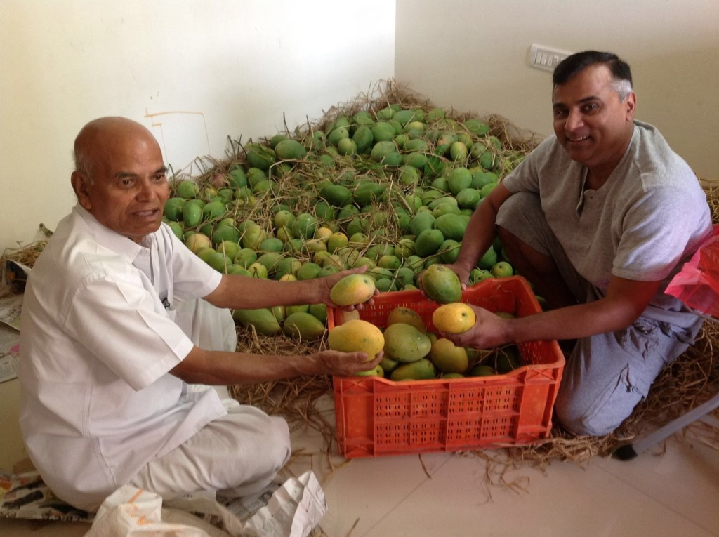 Packing Mangoes with Father in law