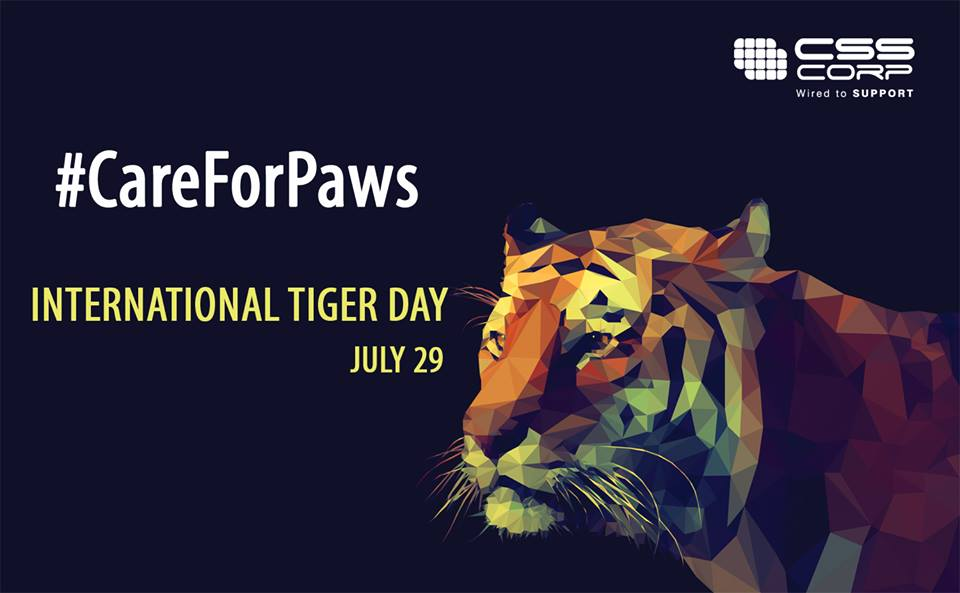 care for paws