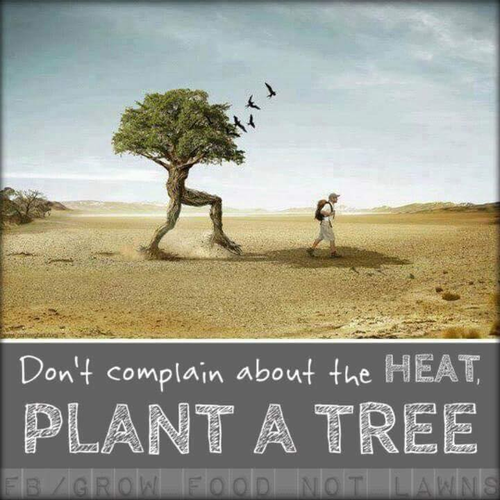 Coorg Wellness - Plant a Tree