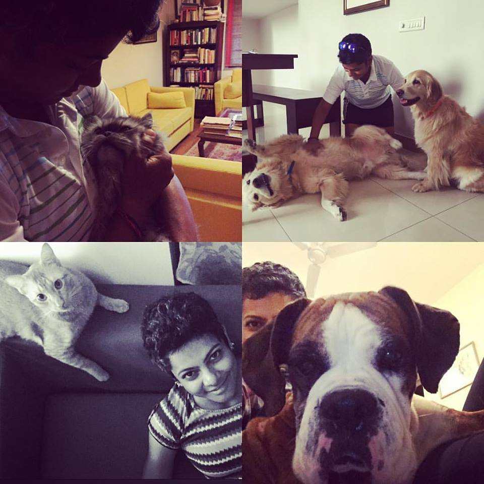 Alfie and Dogs